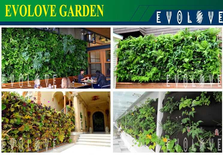 Green wall indoor plant wall