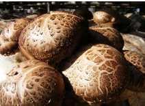 Chinese Asian Cooking Ingredient dried shiitake mushroom