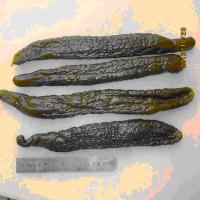Pickled Cucumber(RED) pickled preserved cucumber in drum 500kg wooden case