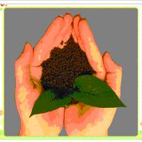FYF Humic acid Magnesium granular