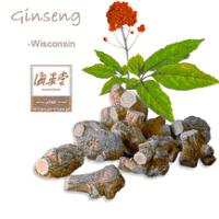 American Ginseng-Wisconsin Panax quinquefolius