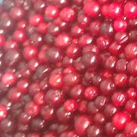 IQF Lingonberry