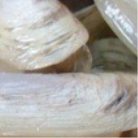 Frozen Cooked Razor Clam