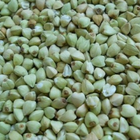 new green buckwheat