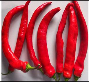 chili cp015