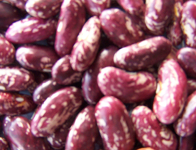 Purple Sepckled Kidney Bean