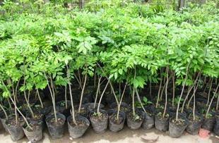 tree seedling trays