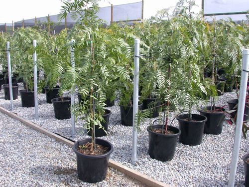 hot sell cheap bicolor seedlings gallon pots tree seedling pot