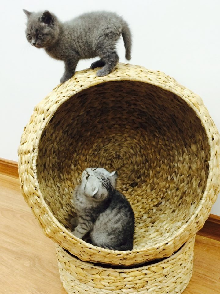 pet product wowen leaves cat bed in alibaba china