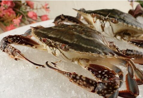 Frozen Swimming Crab