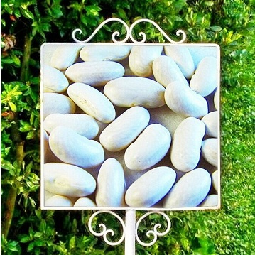 white kidney beans spanish type
