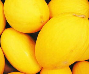hybrid musk melon seeds Golden sun
