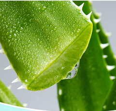 100percent Natural Aloe Vera Extract,aloe-emodin 50-98