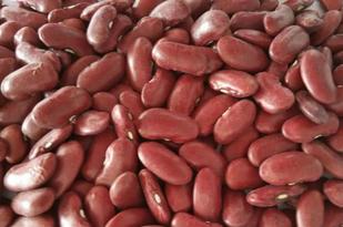 New Crop Dark Red Kidney Bean