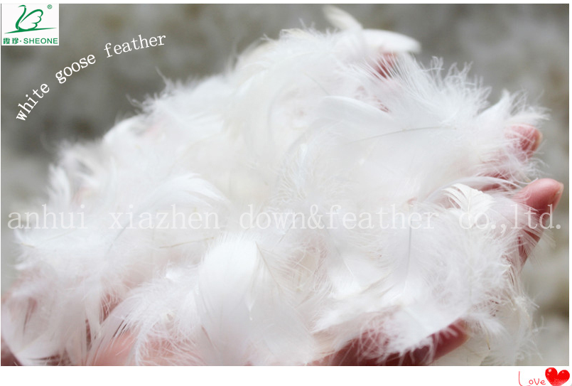 2-4cm white goose feather