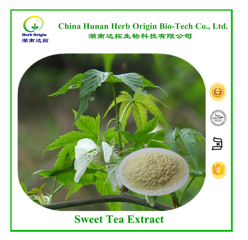 Original tea extract, Rubusoside 70% pure natural sweet tea leaf extract, Chinese sweet tea extract powder