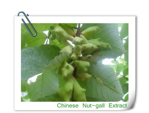 100%Natural herbal extract Galla Chinensis Extract,Tannic Acid Galla Chinensis Extract Powder