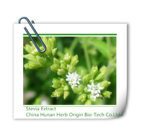 stevia extract,Stevia leaves extract powder, natural stevia extract, natural stevia leaf extract