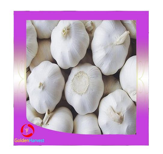 New crops fresh garlic white 4.5cm-6.0cm jingxiang shandong province