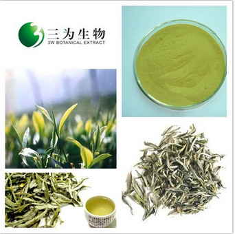 Tea Extract White Tea Extract from 3W Botanical Manufacturer