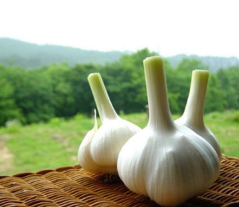 Natural Garlic Extract Oil