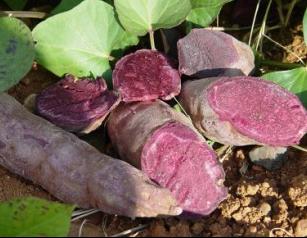 Organic purple sweet potato powder anthocyanin 5%-25% UV
