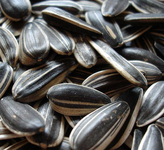 New Crop High Quality Chinese Sunflower Seeds