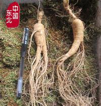 Changbai mountain ginseng slice