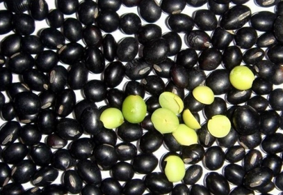 black soybean (yellow inside)