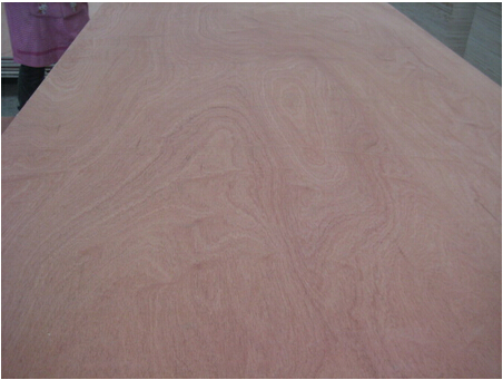 best quality commerical plywood for European client