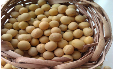 Organic Soybeans( New Crop, Heilongjiang Origin)