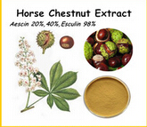 HORSE CHESTNUT EXTRACT POWDER