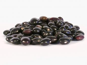 Organic Black Turtle Bean