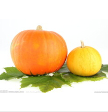 Organic 100% pure pumpkin seed oil