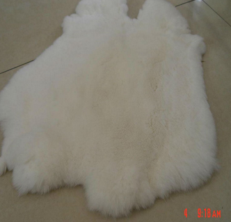 natural white rex rabbit fur pelt or can be dyed