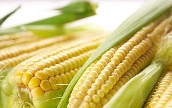 Vacuum Organic Kernels of Sweet Corn