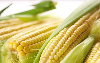 Vacuum Sweet Corn Cob (Ticino)