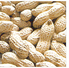 Chinese new crop wholesale peanuts in shell