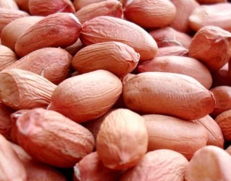 good quality shandong long shape peanut kernels