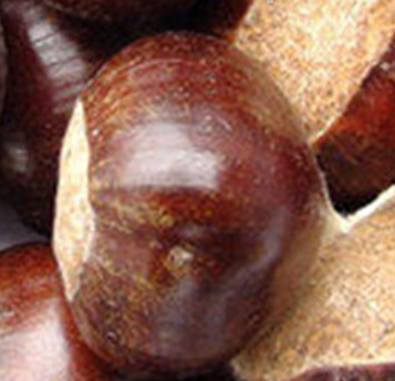 Chinese raw chestnut-- big and small size fresh chestnut