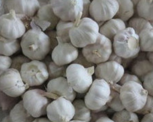 2015 new crop garlic purple garlics white garlic