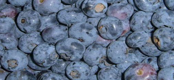 blueberry fruit IQF frozen blueberry blueberry price chinese blueberry