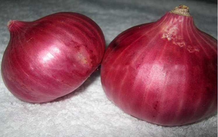 Common onion
