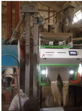 Excellent sorting performance sunflower seeds color sorting machine