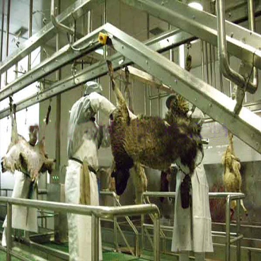 sheep slaughter machine