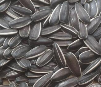 chinese health benefit sunflower seeds