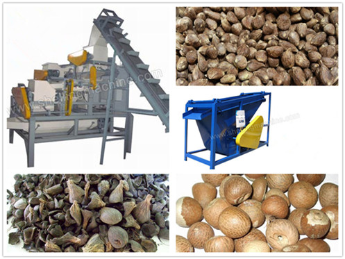 (1000 kg/h)Large Unit of Palm Nuts Shelling and Separating Machine