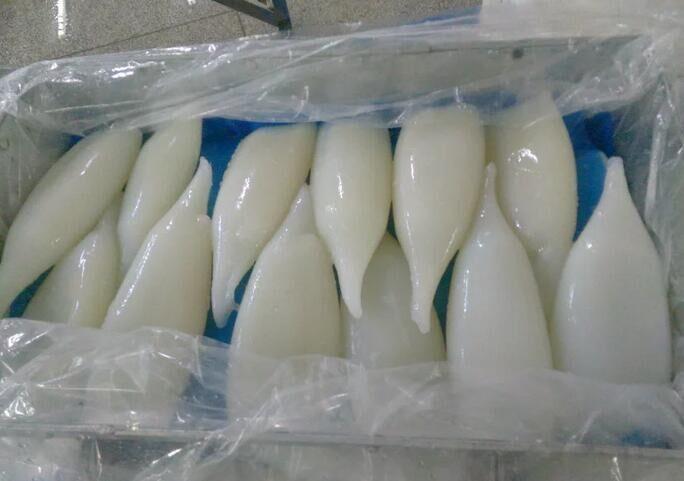 squid tubes
