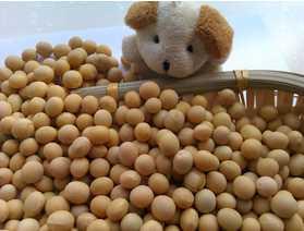 Organic Soybeans( New Crop, Heilongjiang Origin)