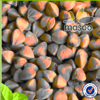 Wholesale chinese gmo bulk dried organic brown roasted buckwheat